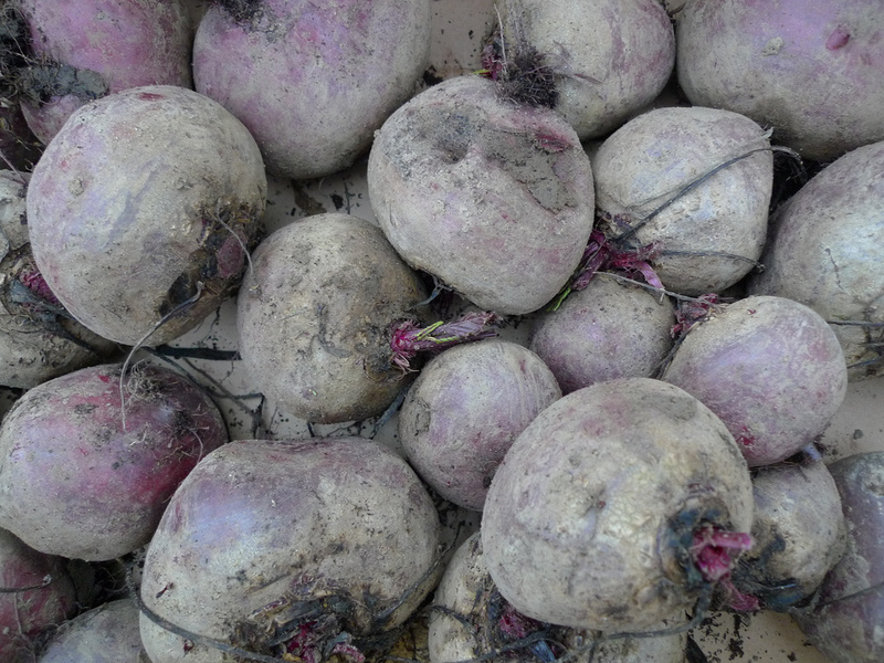 Beetroot: a complete guide