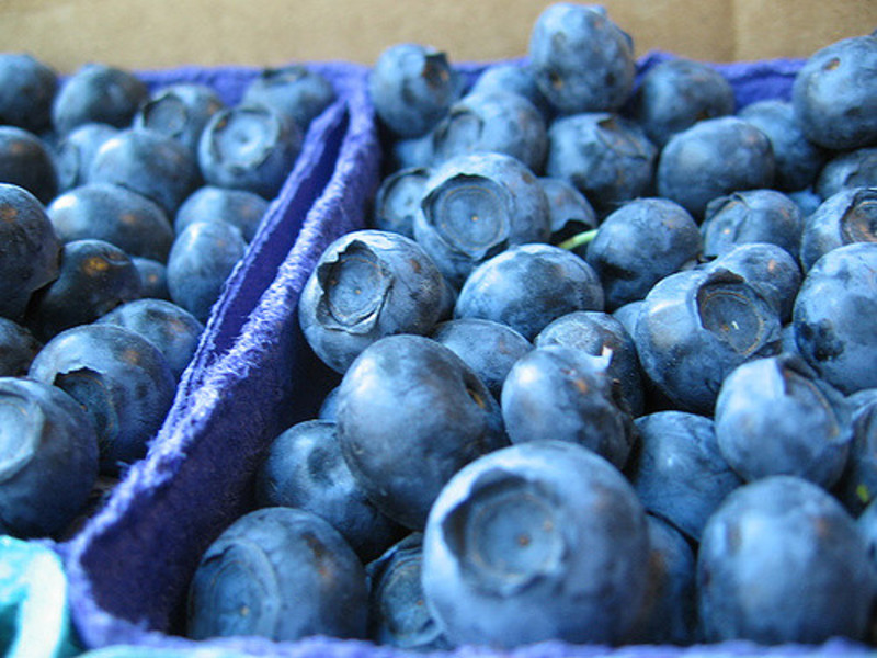 Blueberries: A complete guide