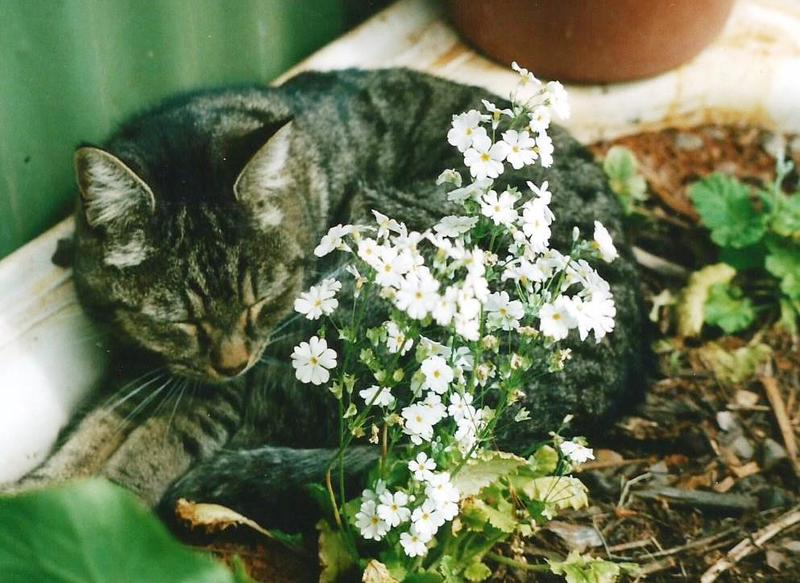Cat and flowers  - Cats and your health