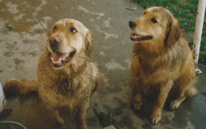Dirty but happy dogs