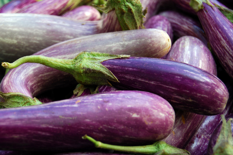Eggplant: A complete guide