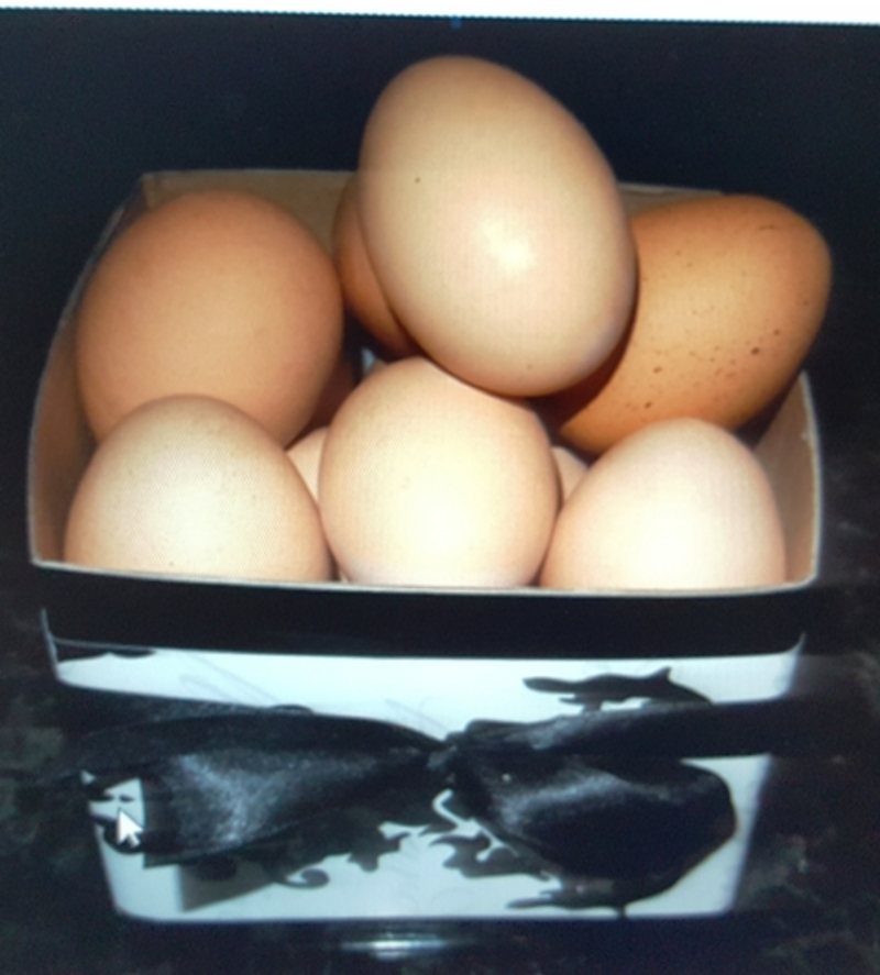 eggs