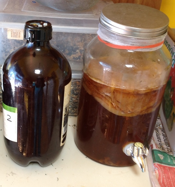 Kombucha 1st Fermentation in jar with tap.. 2nd Fermentation in big brown bottle.