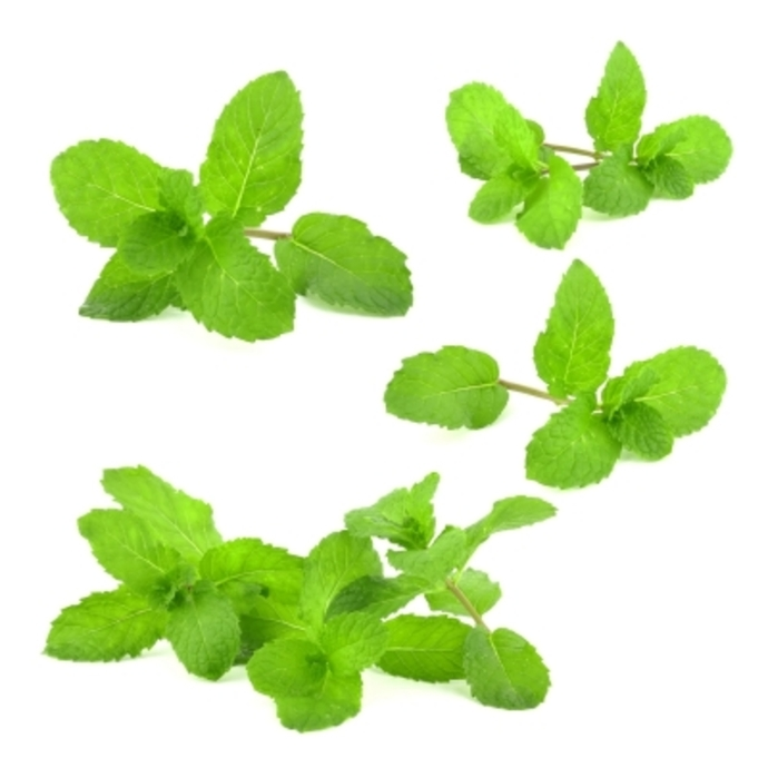 mint, mint leaves, mint leaves for bad breath, natural remedies for bad breath