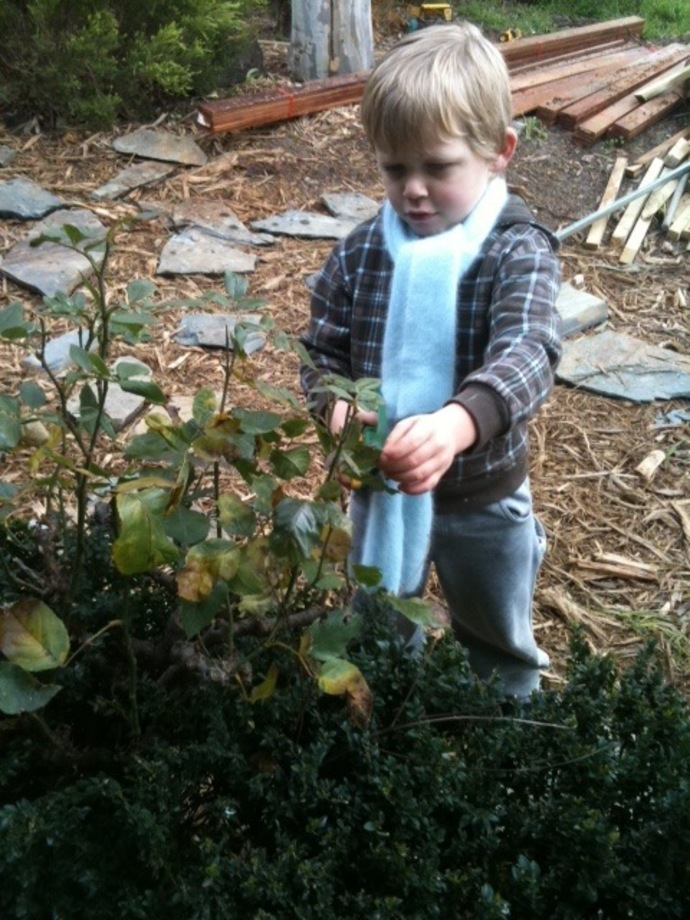 My son loves to get involved with helping prune and protect the roses