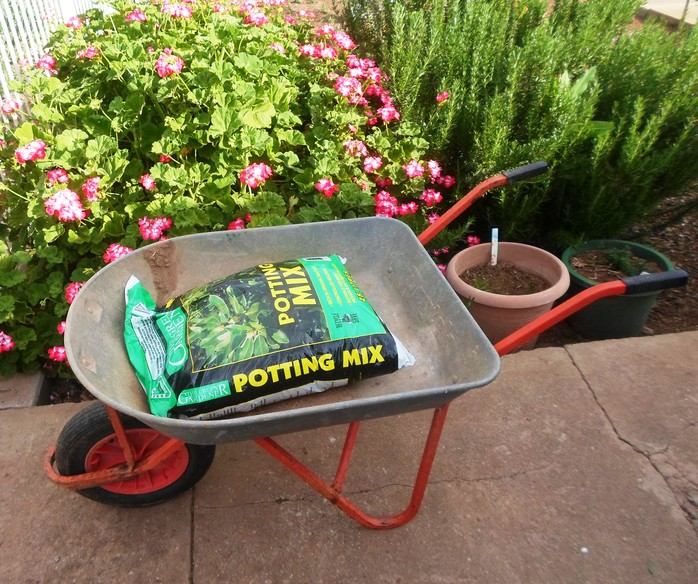 Potting mix in wheelbarrow