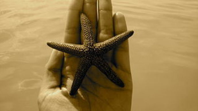 starfish, hand, on hand, human, sea animal
